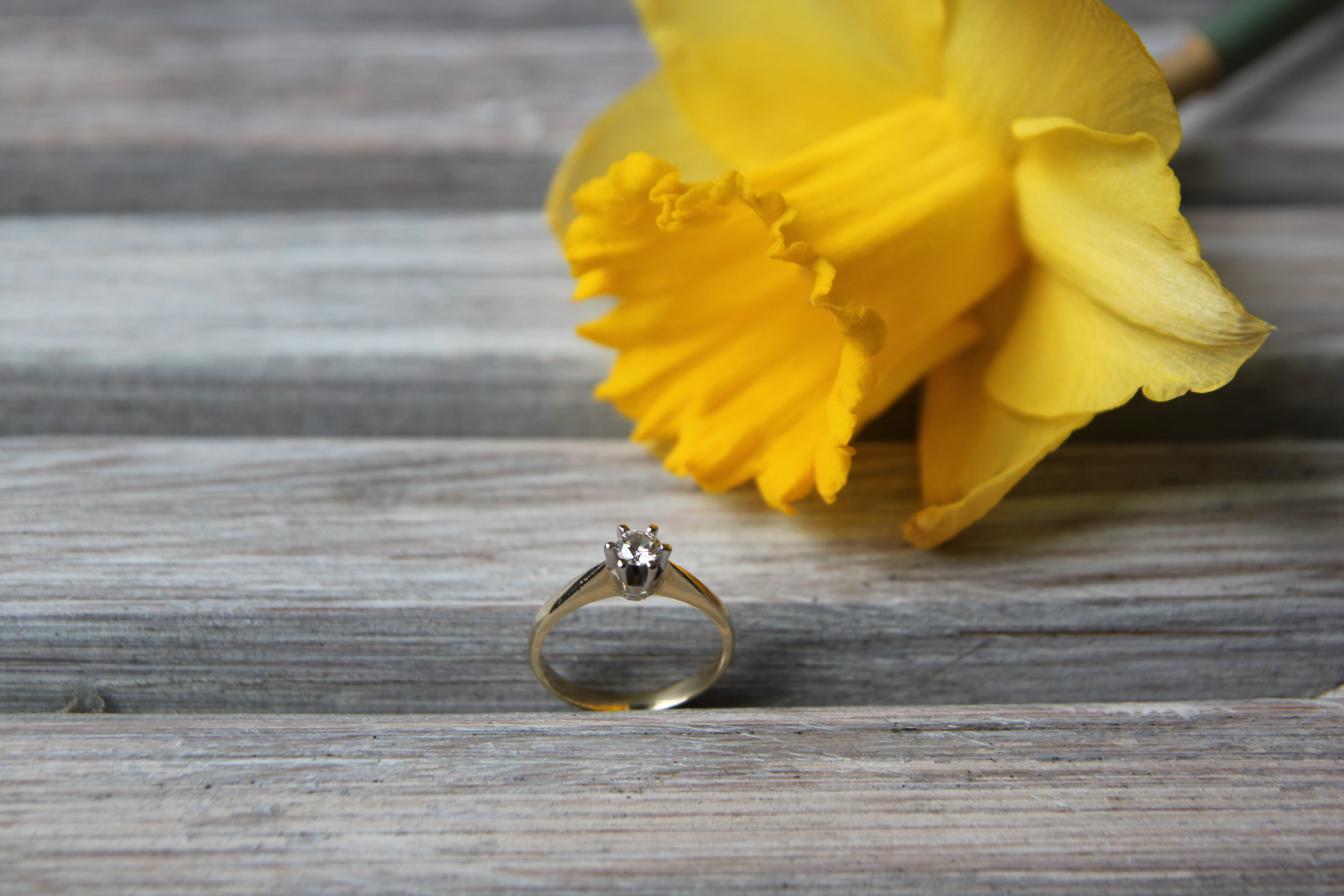 pomysłowapannamłoda/pierścionek zaręnczynowy - diament/żonkil/engagement ring - diamond/daffodil